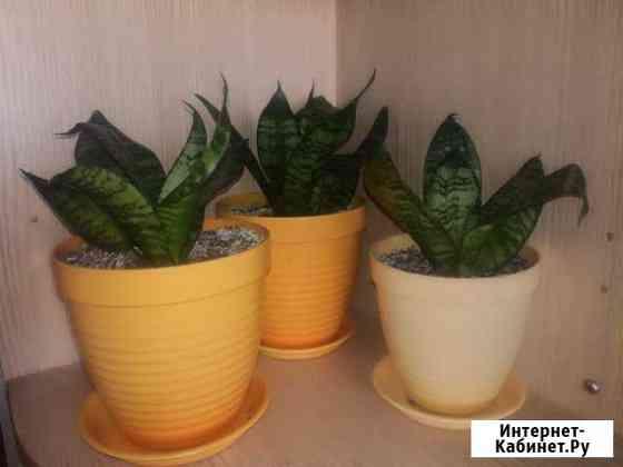 Комнатные растения Нерюнгри