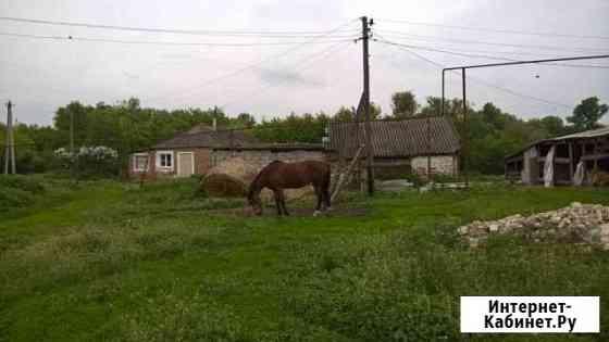 Продается лошадь Мордово