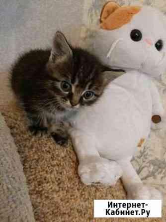 Отдам котят в добрые руки Майкоп