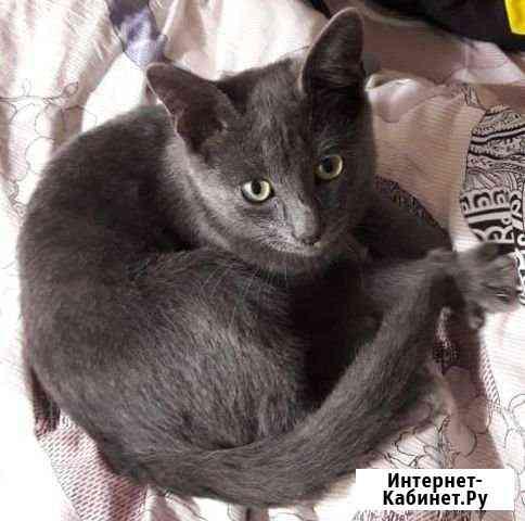 Пропал котенок Русской голубой. Мальчик Йошкар-Ола