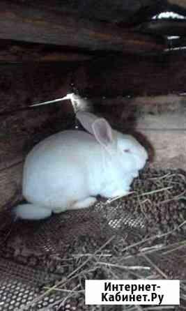 Кролики Дьяконово