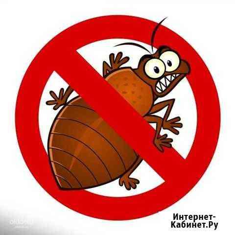 Уничтожение клопов и тараканов Новосибирск