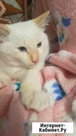 Кот очень умный и ласковый, все кушает глаза голуб Хабаровск