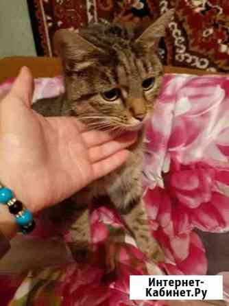 Отдам кошку Петрозаводск