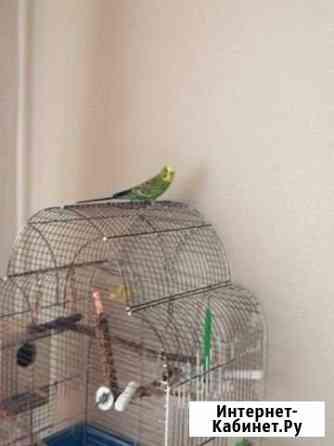 Отдам попугайчика Дзержинский