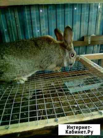 Кролы от 3 мес. Помесь Великан+Баран Бузулук