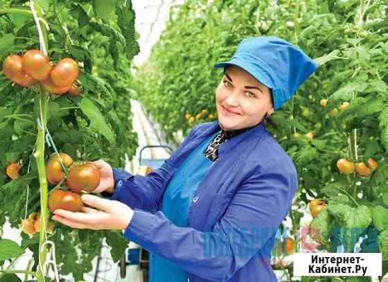 Овощевод, возможно трудоустройство граждан Украины Новомосковск