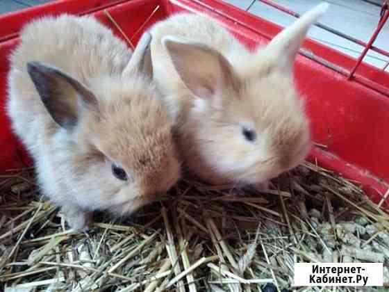 Декоративные крольчата Череповец