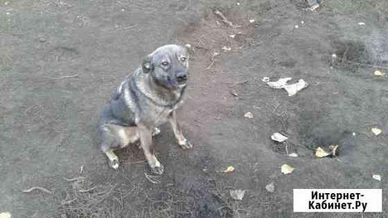 Собака Малыш в самые добрые ручки Белгород