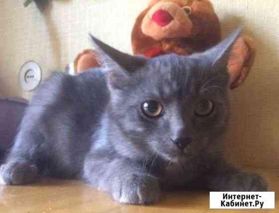 Котёнок стерилизованный в добрые руки Новосибирск