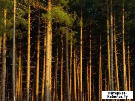 Лес на корню Владимир