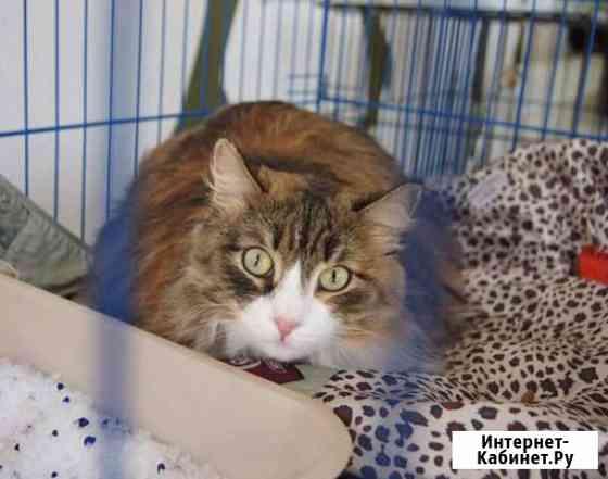 Подарите чудесной кошечке Иришке дом Новосибирск