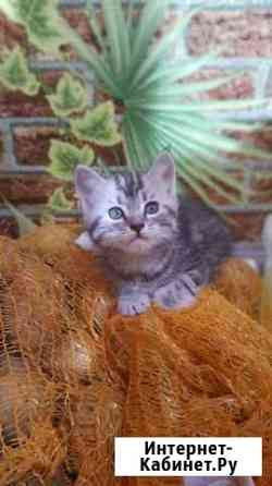 Красивые и игривые котята Майкоп