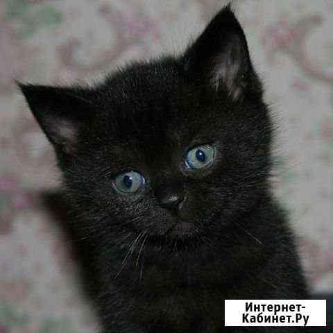 Котёночек Вологда