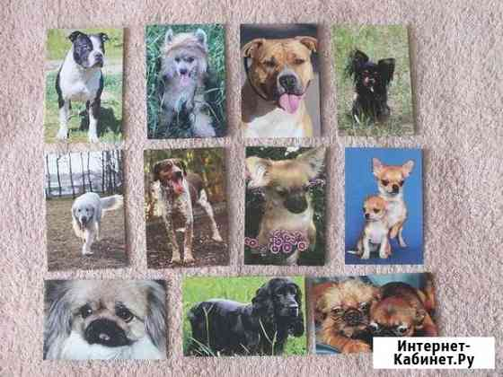 Карманные календарики собаки Улан-Удэ