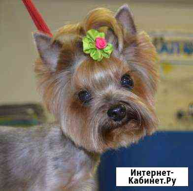 Стрижка собак и кошек на Гражданке и Девяткино Санкт-Петербург