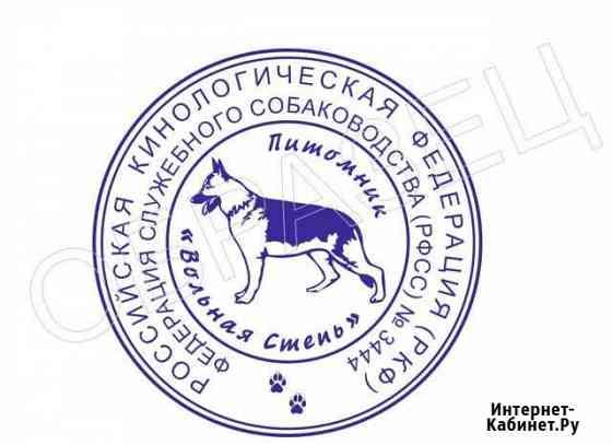 Услуги кинолога Волгоград