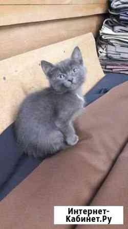 Отдам котёнка Пермь
