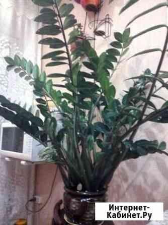Комнатные цветы Иркутск