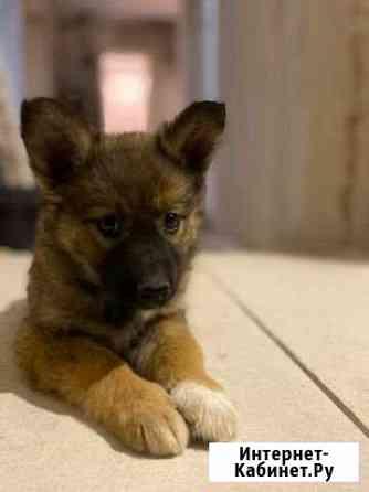 Девочка щенок дворняжка 2 месяца Новосибирск
