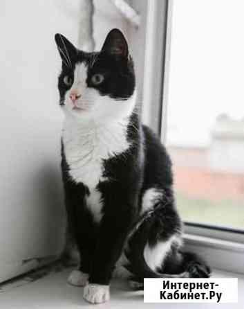 Добродушный кот-крысолов бесплатно Вологда