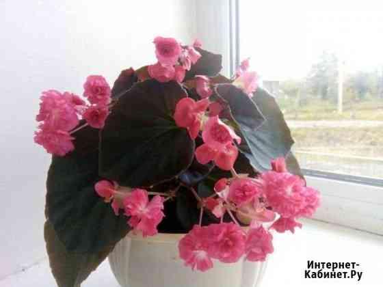 Комнатные растения Чебоксары