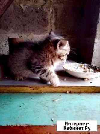 Отдам 2 котенка В добрые руки Белгород