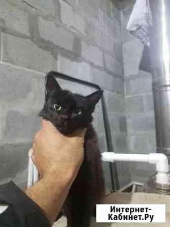 Чёрная кошка Бобровский