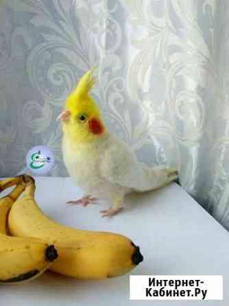 Попугай корелла, валяная игрушка Ангарск