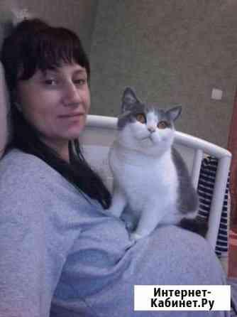 Отдам в добрые руки кошку Ярославль