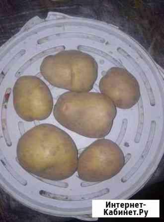 Домашний картофель, разные сорта Кипень