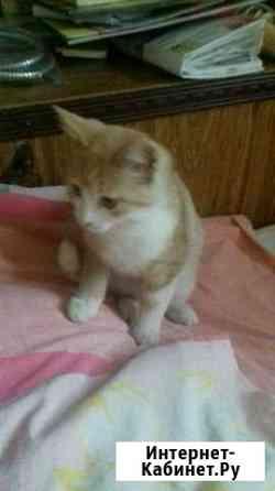 Котёнок Астрахань