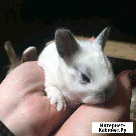 Кролики мини Астрахань