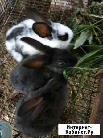 Кролики Волосово
