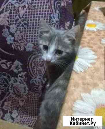 Отдам котят (возраст 2 мес) Аша