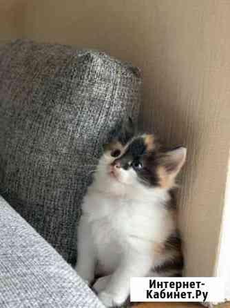 Котята в добрые руки Нижний Новгород