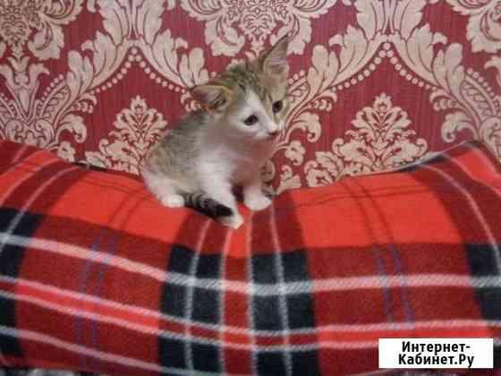 Котёнок 2.5 мес. (девочка) Москва