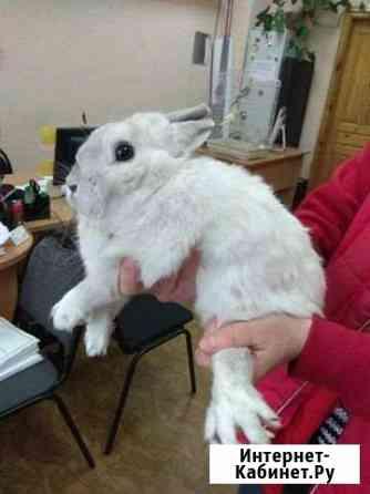 Отдам декоративного кролика, без клетки Киров