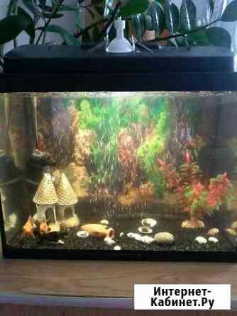 Аквариум и рыбки Вологда