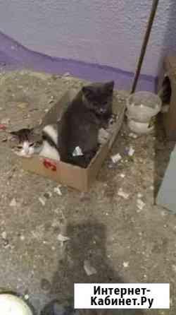 Котята Новосибирск