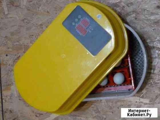 Инкубатор автоматический цифровой 12 куриных яиц Ржев