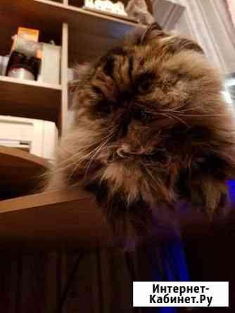 Кошка для вязки Ижевск