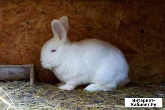 Кролики Пенза
