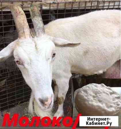 Козье молоко/сыр Кротовка