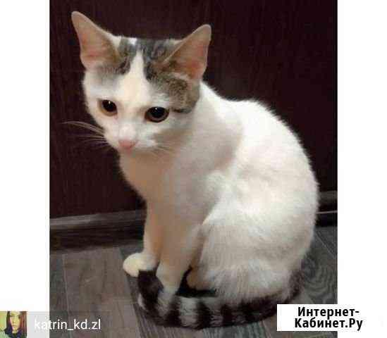 Отдаём кошку Казань