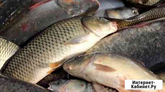 Живая рыба Пятигорск