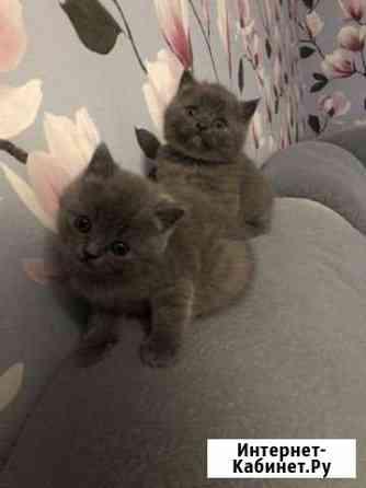 Продаю котят два мальчика Чебоксары