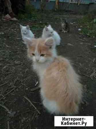 Отдам котят в добрые руки Брянск
