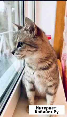 Кошечка молодая и безумно ласковая Санкт-Петербург