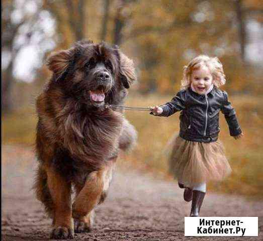 Выгуляю вашу собаку Петрозаводск